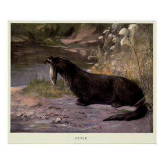 Vintager Otter Painting (1909) Poster