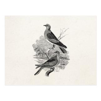 Vintager Schildkröte-Tauben-Vogel-personalisierte Postkarte