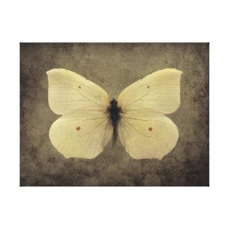 Vintager Schmetterling Galerie Gefaltete Leinwand