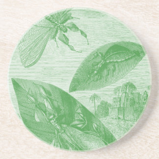 Vintages Entomologie-Grün Katydid Fliegen-Blatt Getränkeuntersetzer