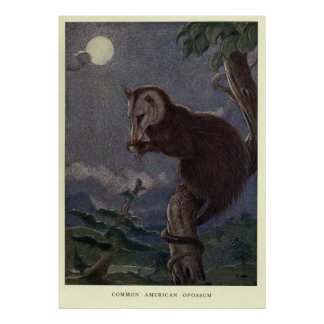 Vintages Opossum Painting (1909) Poster