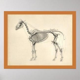 Vintages Pferdeskelettartiger Poster