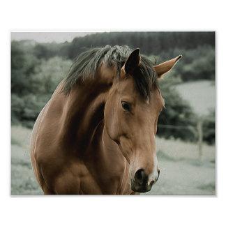Vintages Pferdetiermalereikunst Photo Drucke