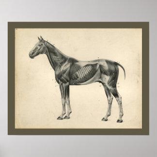 Vintages Pferdeveterinärmuskel-Anatomie-Druck Poster