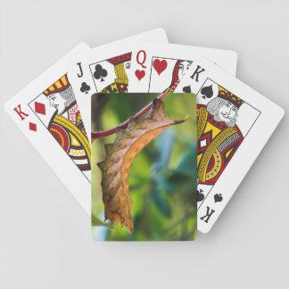 Virginia-Strampler-Sphinx-Raupen-Spielkarten Spielkarten