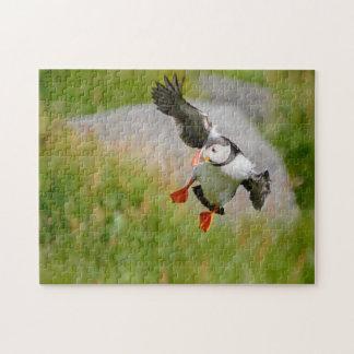 Vogel des atlantischen Papageientauchers, der Puzzle