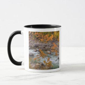 WA, Wenatchee staatlicher Wald, Ahornbaum und Tasse