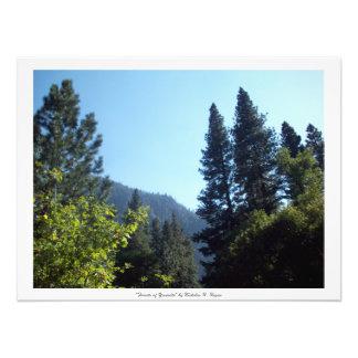 """""""Wälder von Yosemite"""" beruflich Photo Druck"""