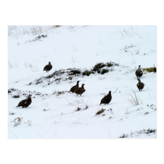 Waldhuhn in der Schnee-Postkarte Postkarte