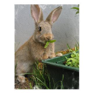Waldkaninchen-Kaninchen-Postkarte Postkarte
