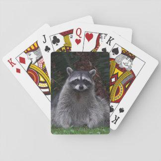 Waldraccoon-Foto Spielkarten