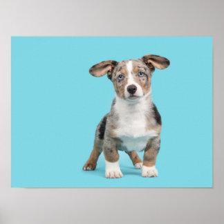 Walisercorgiwelpe mit blauen Augen auf blauem Poster