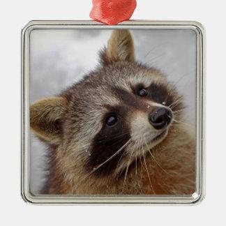 Waschbär Silbernes Ornament