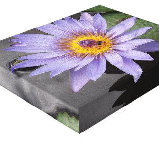 Wasser-Lilien-Leinwand-Druck