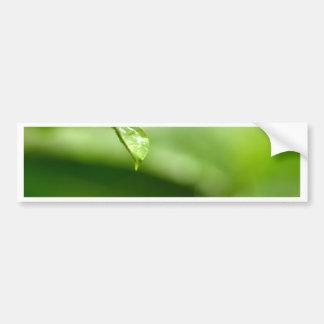 Wassertropfen auf Blätter Autoaufkleber