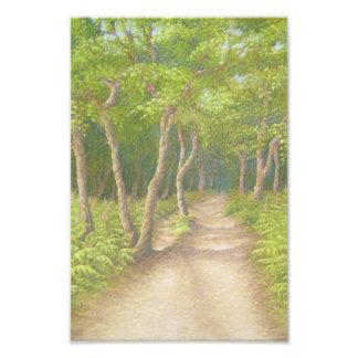 Weg durch Bäume, Leith Hügel-photographischer Fotodruck