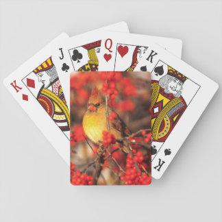 Weibliche und rote Beeren des Kardinals, IL Pokerkarten