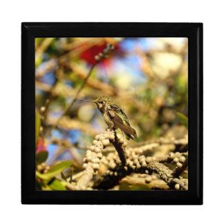 Weiblicher Annas Kolibri, Kalifornien, großes Foto Erinnerungskiste
