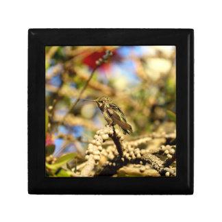 Weiblicher Annas Kolibri, Kalifornien, kleines Geschenkbox