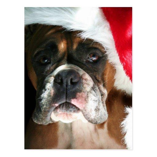 Weihnachtsboxer-Hundepostkarte Postkarten