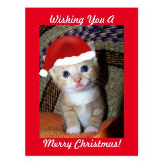 Weihnachtskätzchen-Postkarte Postkarte