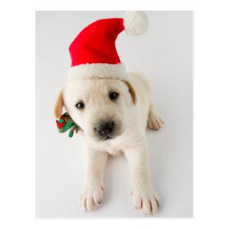 Weihnachtswelpe - Porträt von niedlichem Labrador Postkarte