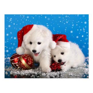 Weihnachtswelpen-weißer SpitzSpitz Postkarte