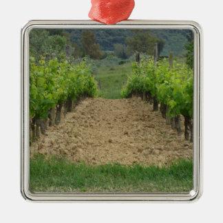Weinberg im Frühjahr. Toskana, Italien Quadratisches Silberfarbenes Ornament
