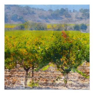 Weinberg in Napa Valley Kalifornien Perfektes Poster