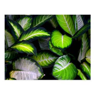 Weiß-und Grün-Blätter-Postkarte Postkarten