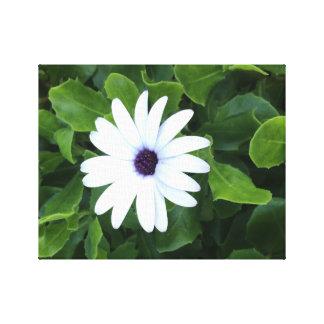 Weisse Blume Leinwanddruck