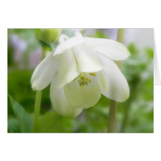 Weiße Columbine-Blume - Aquilegia Karte