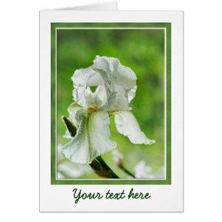 Weiße Iris-Nahaufnahme-Fotografie mit Regentropfen Karte