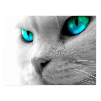 Weiße Katzen-Nahaufnahme mit hellen Augen Postkarte