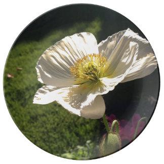 Weiße Mohnblumen-Geldstrafe-Porzellan-Platte Teller