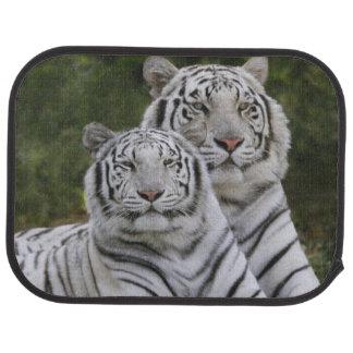 Weiße Phase, bengalischer Tiger, der Tigris Automatte