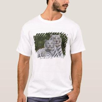 Weiße Phase, bengalischer Tiger, der Tigris T-Shirt