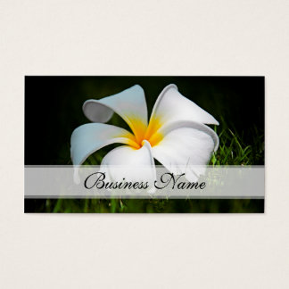 Weiße Plumeriafrangipani-Hawaii-Blumen Visitenkarten
