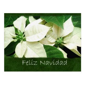 Weiße Poinsettias 1 - Feliz Navidad Postkarte