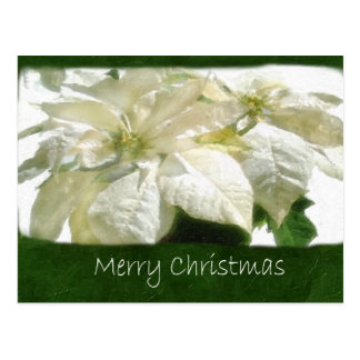 Weiße Poinsettias 2 - frohe Weihnachten Postkarte