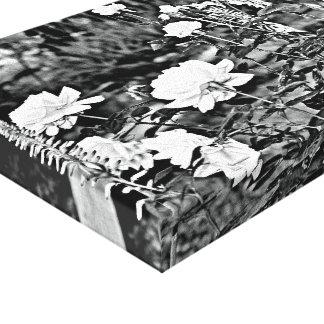 Weiße Rose in der schwarzen Garten-Leinwand-Kunst Leinwanddruck