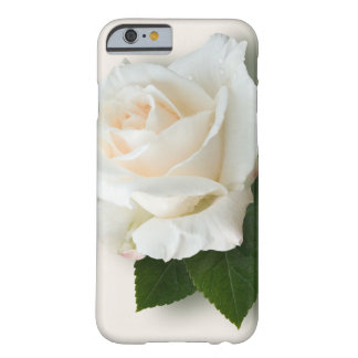 Weiße Rose 'Pascali Barely There iPhone 6 Hülle