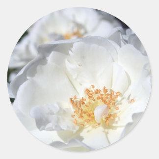 Weiße und weiße Rosen, die Aufkleber Wedding sind