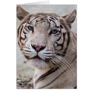 Weißer bengalischer Tiger Grußkarte