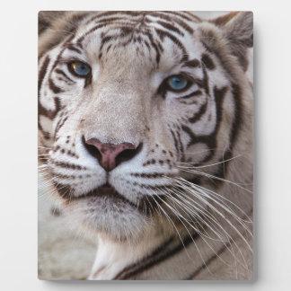 Weißer bengalischer Tiger Platten