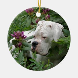 Weißer Boxer in rosa Rhodies Rundes Keramik Ornament