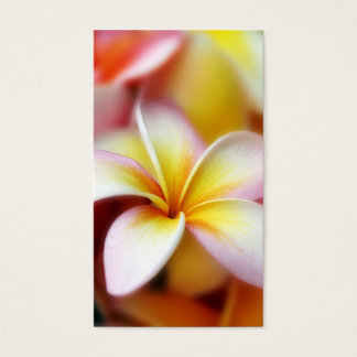 Weißer Plumeriafrangipani-Hawaii-Blumen-Hawaiianer Visitenkarten