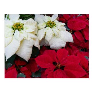 Weißer und roter Weihnachtsfeiertag der Postkarte