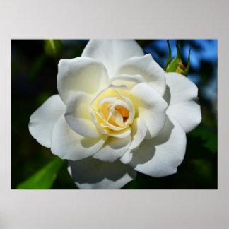 Weißes Hochzeits-Rosen-Plakat Poster