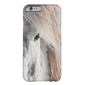 Weißes isländisches Pferdegesicht, Island Barely There iPhone 6 Hülle